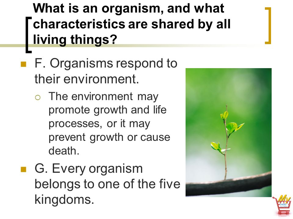 F. Organisms respond to their environment.