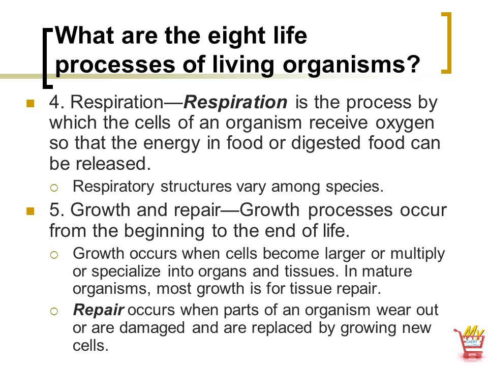 What are the eight life processes of living organisms