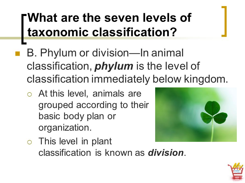 What are the seven levels of taxonomic classification
