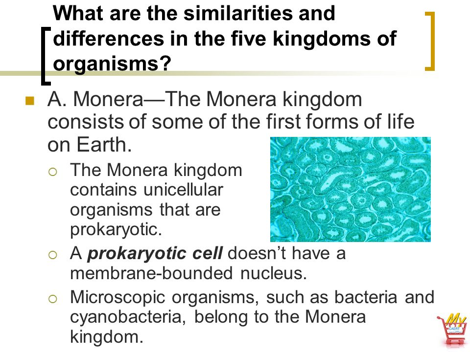 What are the similarities and differences in the five kingdoms of organisms