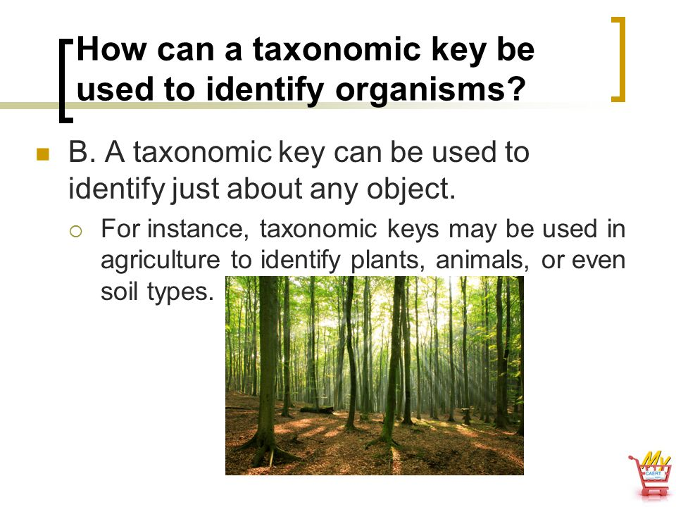 How can a taxonomic key be used to identify organisms