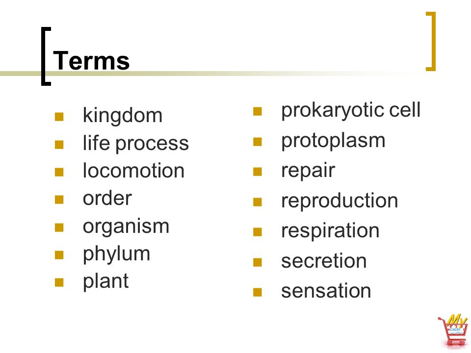 Terms prokaryotic cell kingdom protoplasm life process repair