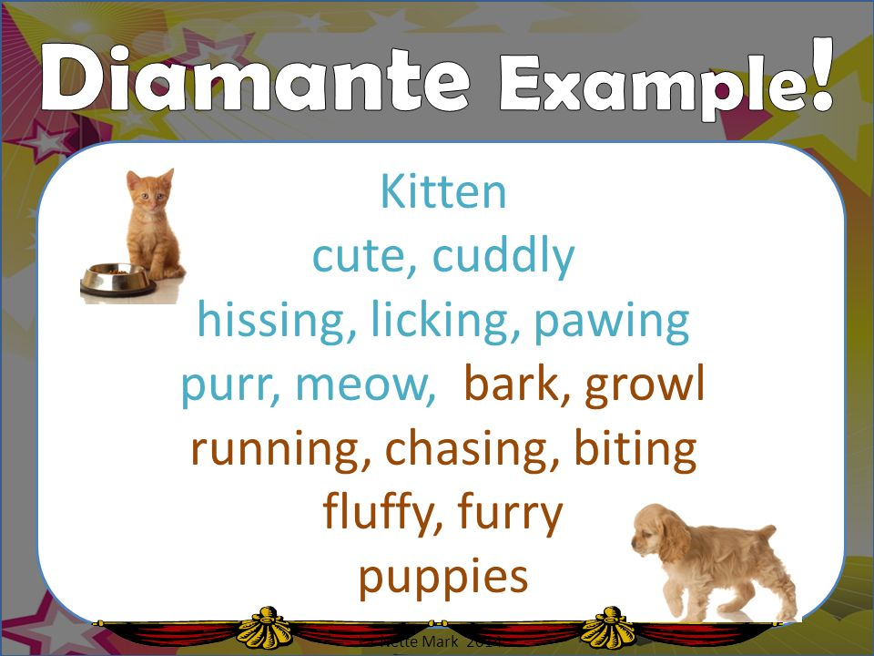 Diamante Example! Kitten cute, cuddly hissing, licking, pawing