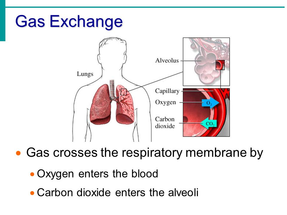 Gas exchange regulation of respiration draled helmy ppt download 2 gas ccuart Choice Image