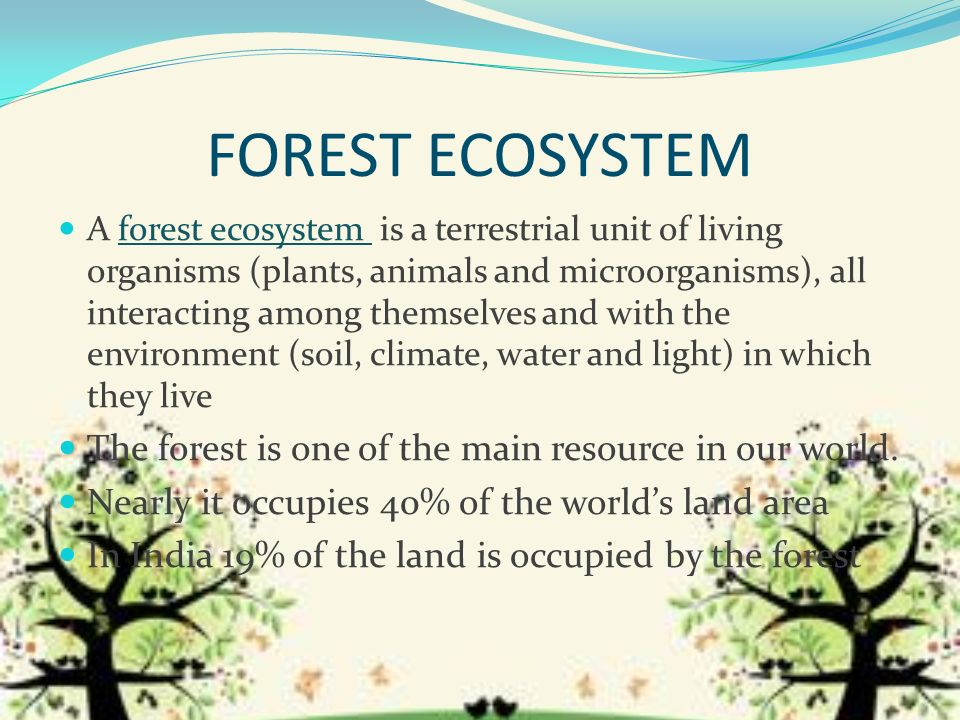 Unusual Facts About the Forest Ecosystem | Sciencing