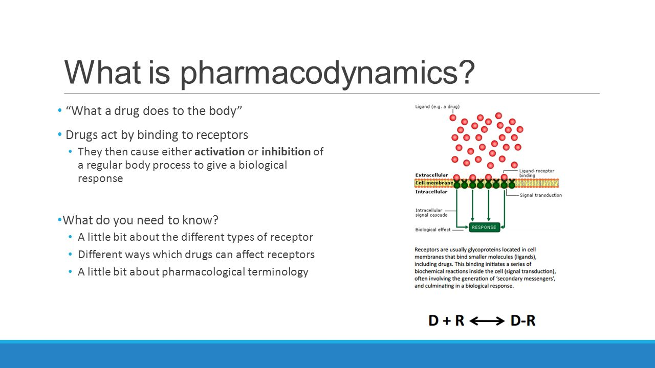 Year One Pharmacodynamics Ppt Video Online Download