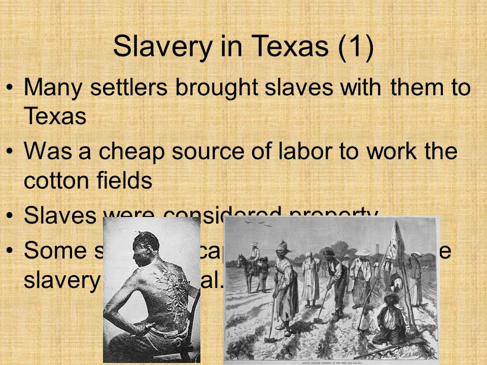 what were the causes of slavery Causes and effects of modern slavery there is no single reason why slavery is still in existence, or thriving for that matter, and there are a multitude of effects.