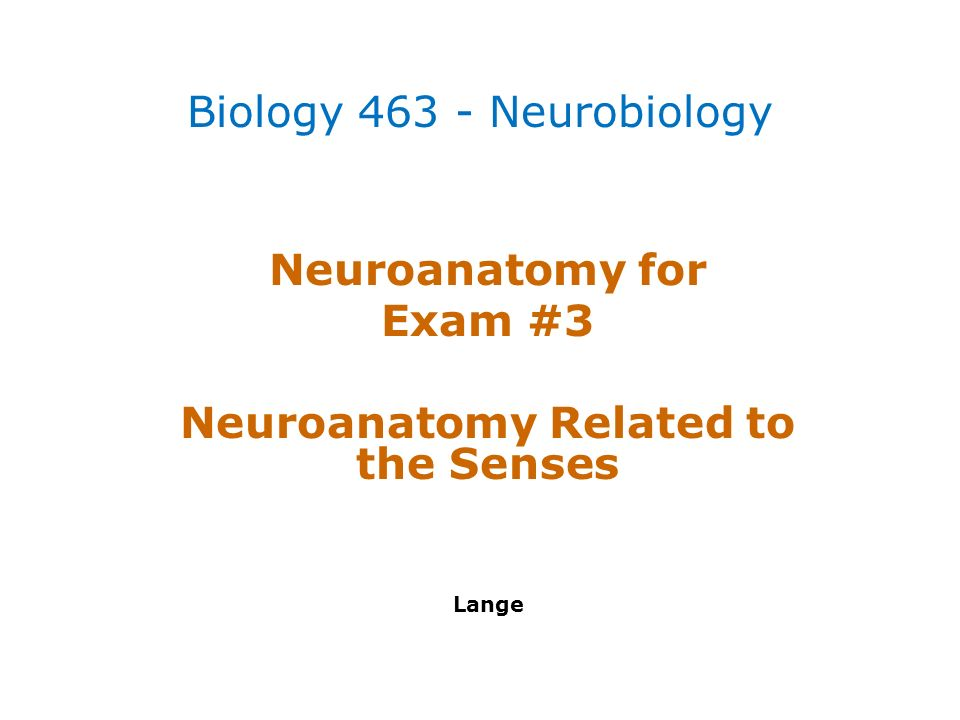 Neuroanatomy for Exam #3 Neuroanatomy Related to the Senses Lange ...