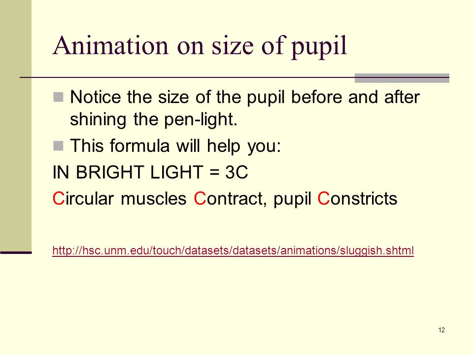 Animation on size of pupil
