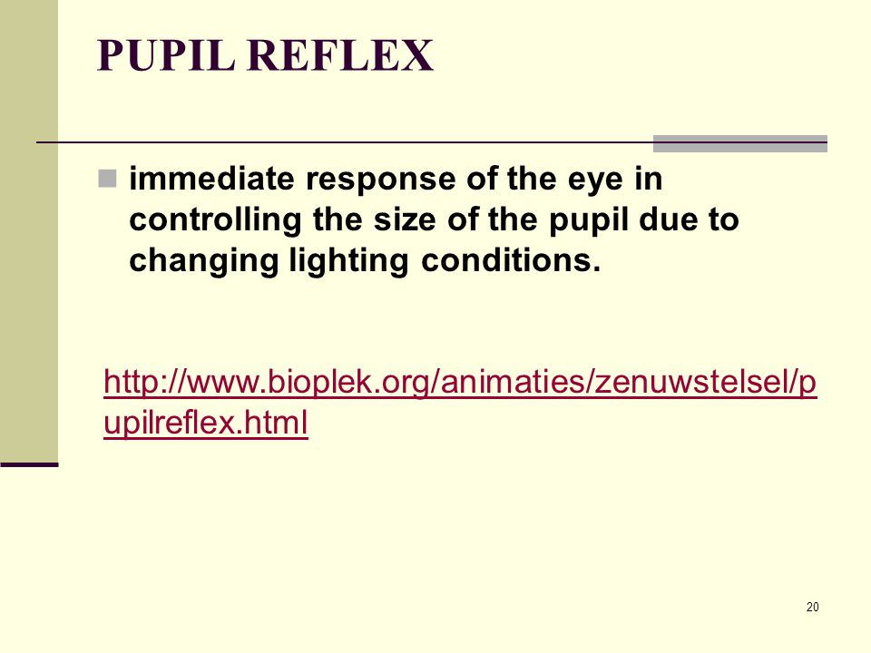 PUPIL REFLEX immediate response of the eye in controlling the size of the pupil due to changing lighting conditions.