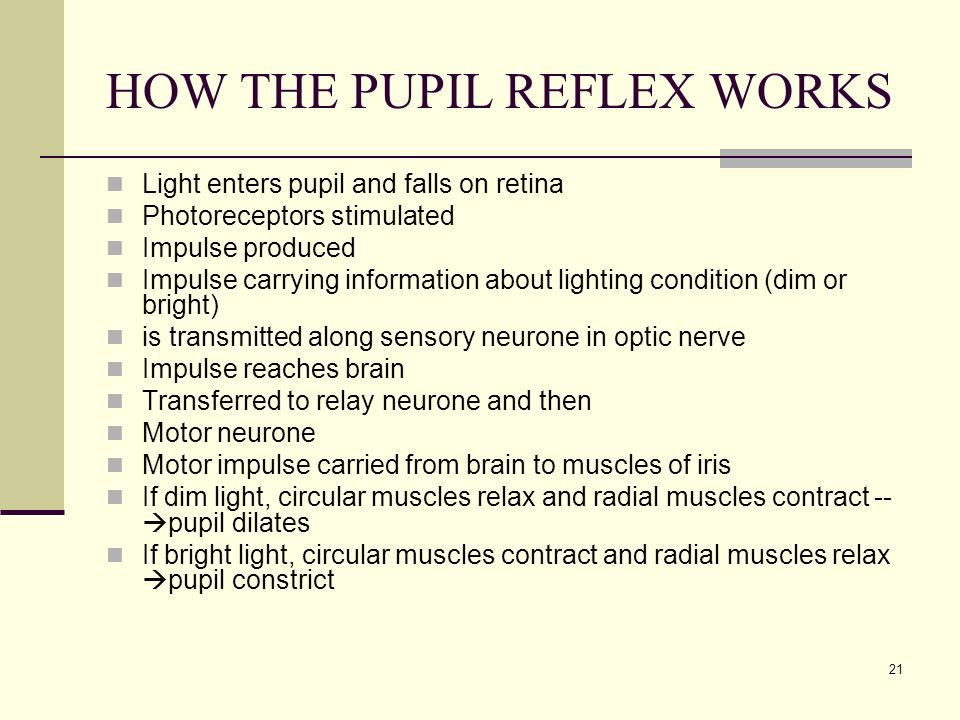 HOW THE PUPIL REFLEX WORKS