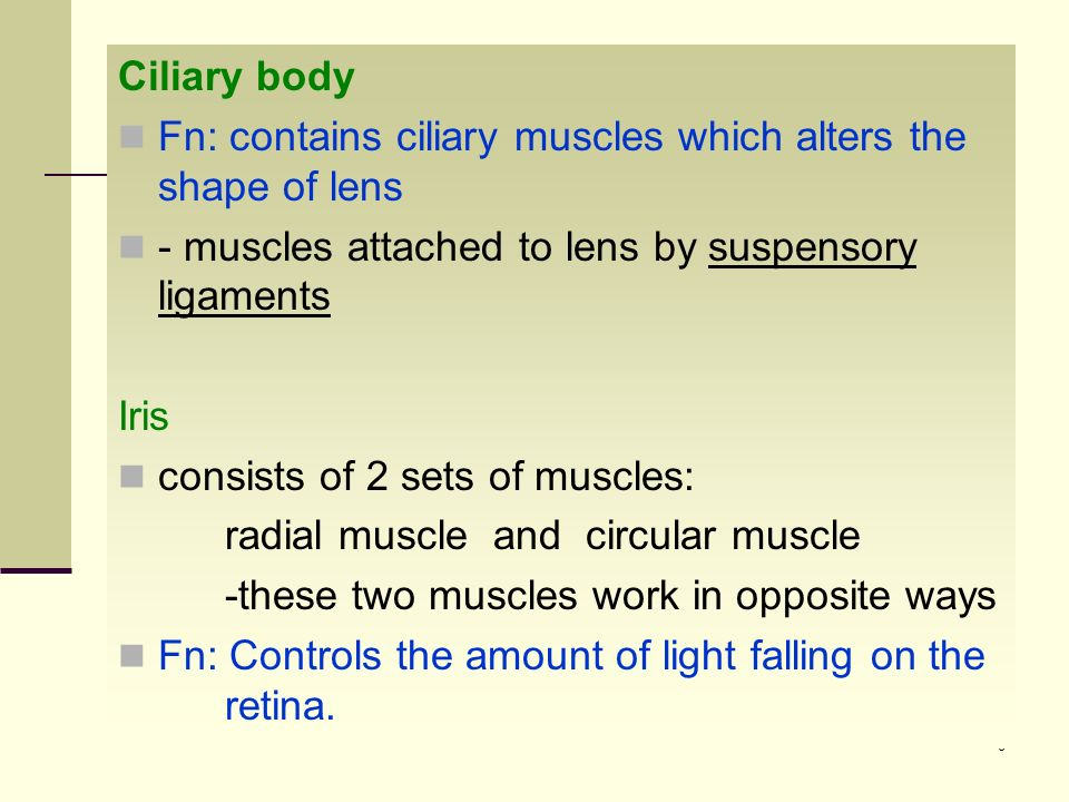 Ciliary body Fn: contains ciliary muscles which alters the shape of lens. ‑ muscles attached to lens by suspensory ligaments.