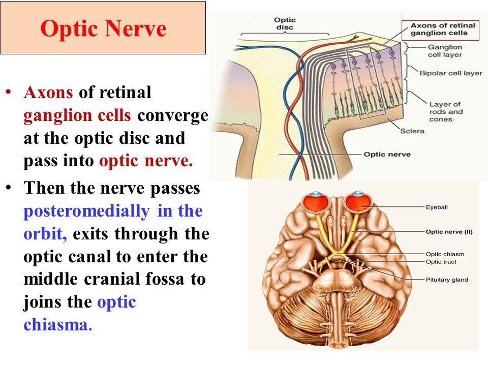 Cranial Nerves Iiiii Ivvi And Visual Pathway Ppt Video Online