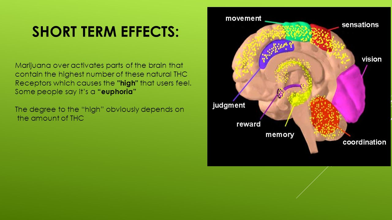 effects of alcohol on the brain essay