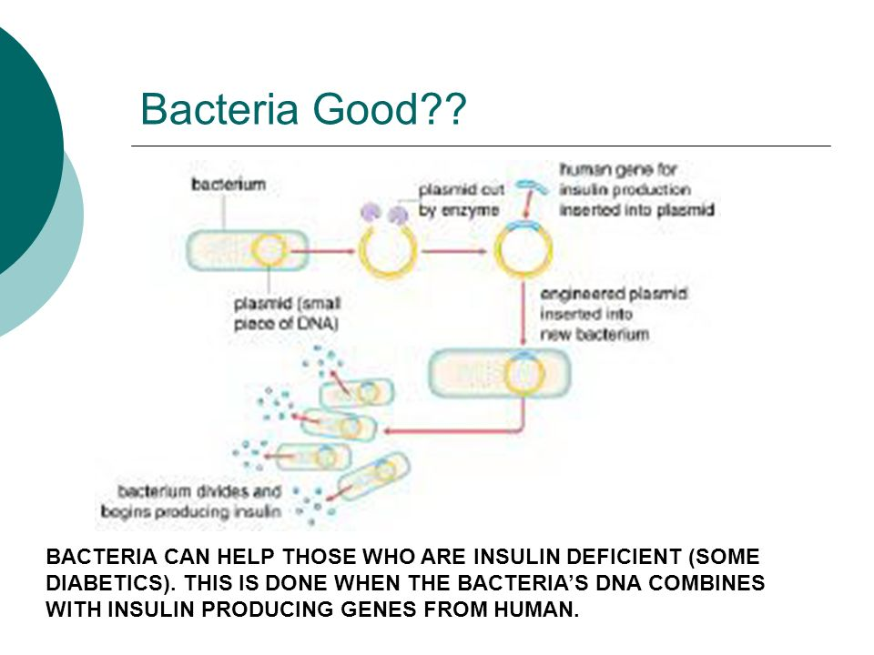 bacteria and plasmid to produce red Plasmid plasmids are small circular dna molecules that exist apart from the chromosomes in most bacterial species under normal circumstances, plasmids are not essential for survival of the host bacteria however, many plasmids contain genes that enable bacteria to survive and to prosper in certain environments.