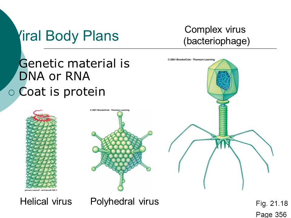 UNIT 8:Chapter 19 Bacteria and Viruses. - ppt video online ...