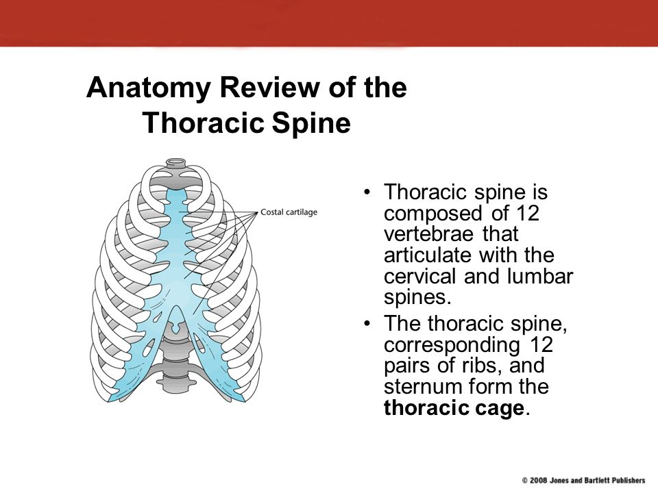 Thoracic Back Pain