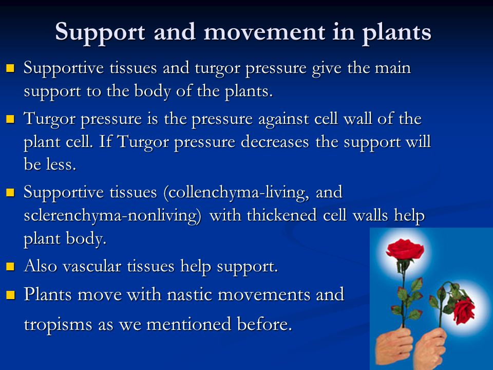 nastic movement in plants pdf