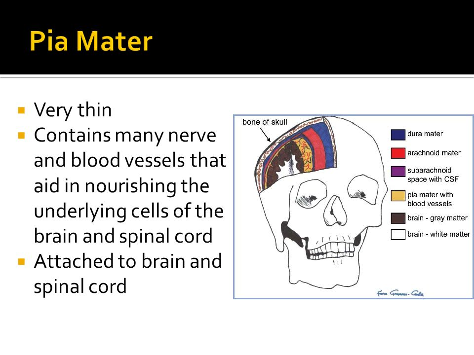 Meninges and Spinal Co...