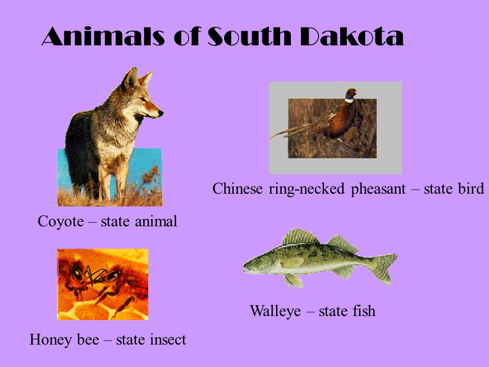 animals of south dakota