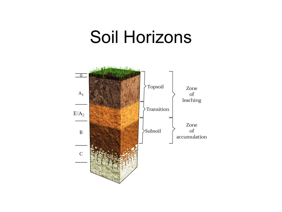 Soils and regolith ppt video online download for Soil horizons