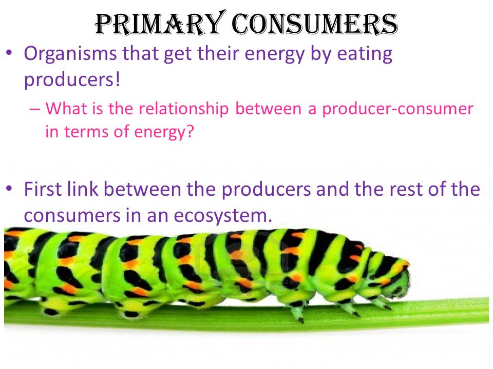 consumer and producer relationship