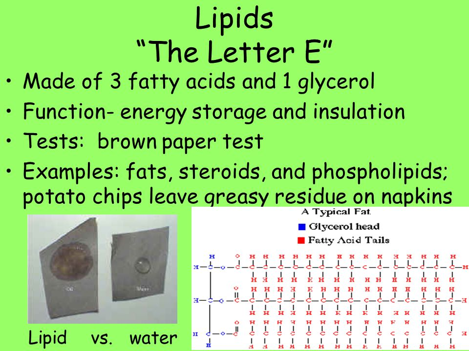 lipids essay Lipids - all types of fats, regardless of whether they are liquid or solid lipids are  an important part of the diet of all humans and many types of.