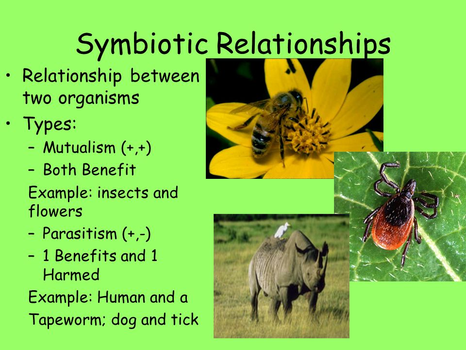 mosquito and human symbiotic relationship