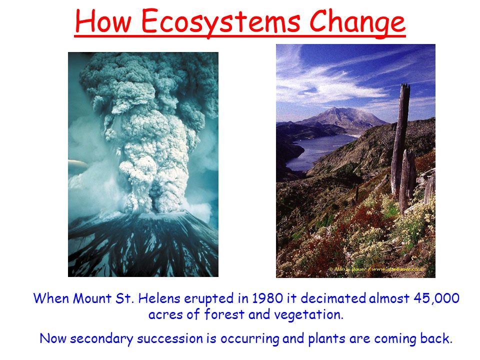 Ozone Depletion For Kids How Ecosystems Change ...