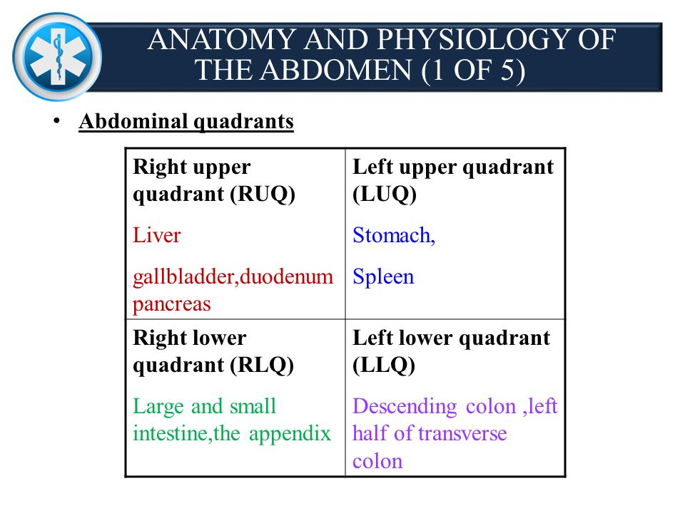 Chapter 28 abdominal genitourinary injuries ppt download 3 anatomy and physiology ccuart Images