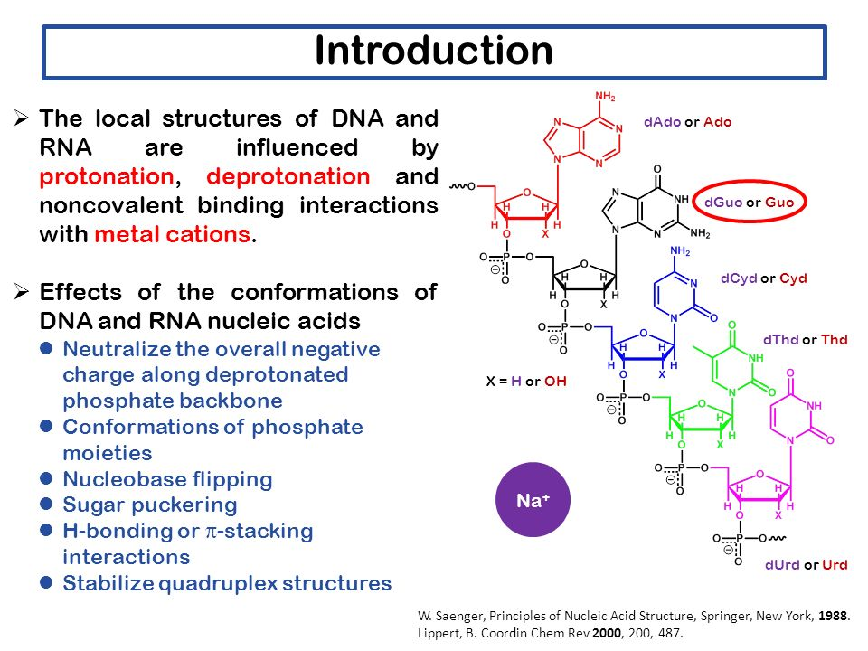 What Are the Effects of an Alkaline pH on the Structure of DNA?