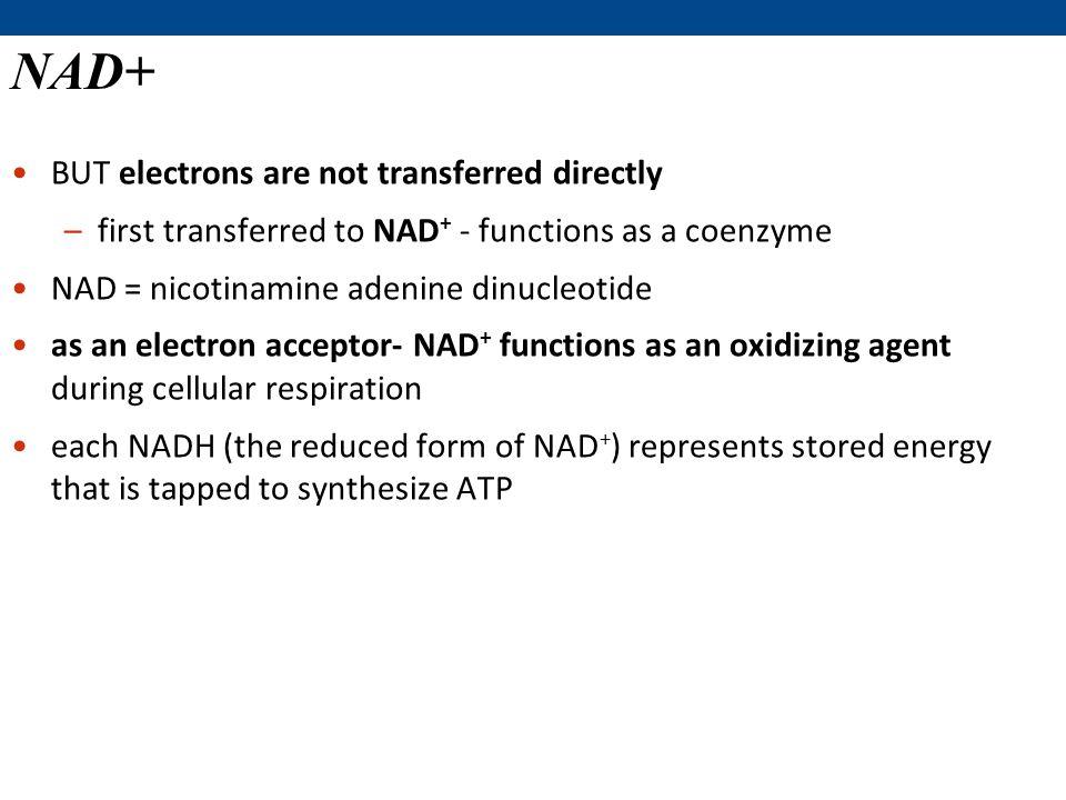 Cellular Respiration and Fermentation - ppt download