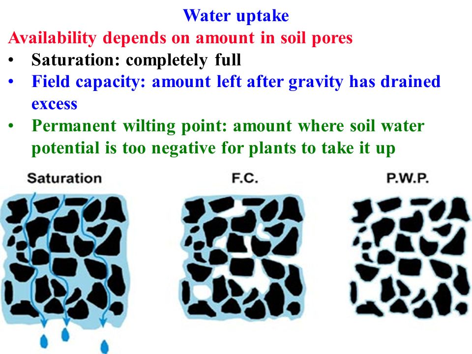 Water uptake path starts at root hairs must take water for Soil full form