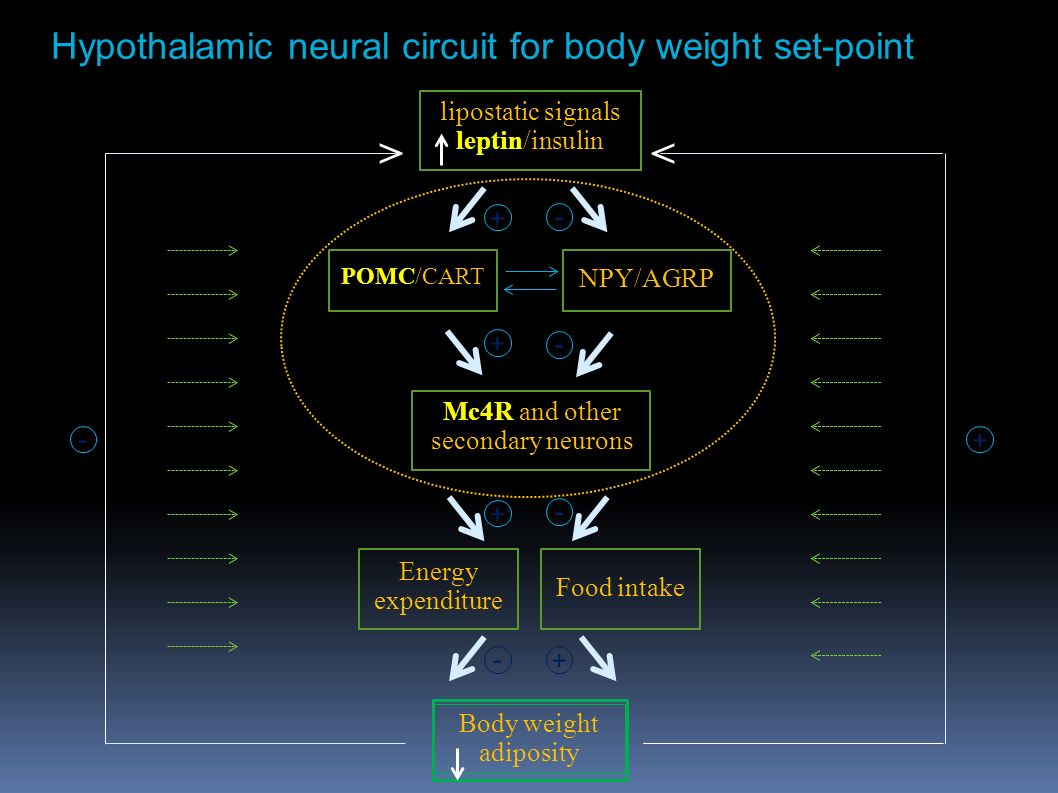 "Physiological basis for ""Metabolic Obesity"" & ""Hedonic ..."