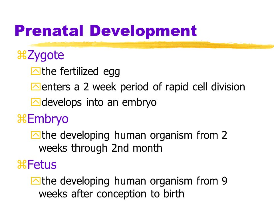 period of the zygote The fertilized egg then undergoes several divisions to form a structure called the zygote it moves into the uterus within a period of 5-7 days and is then termed as embryo.