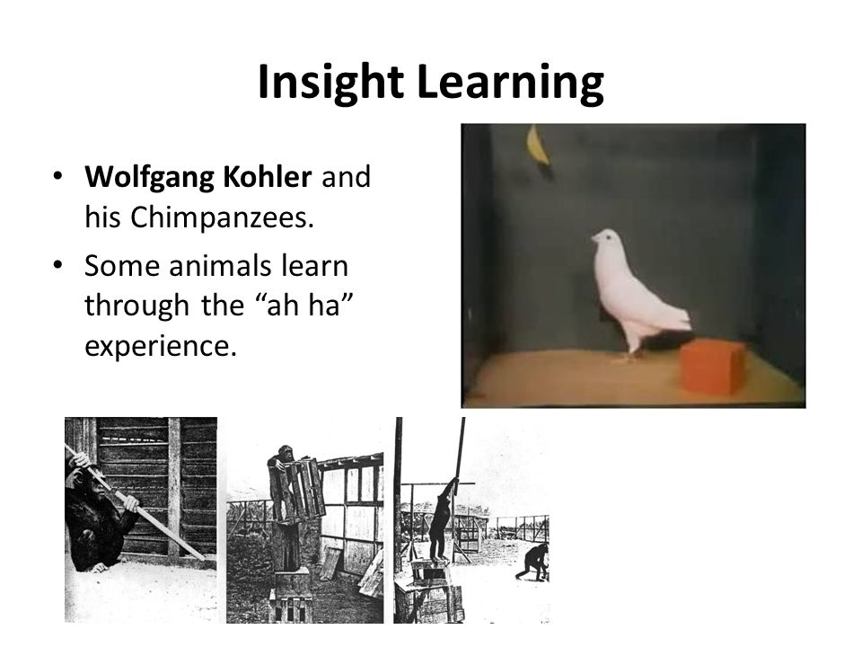 insight learning Start studying unit 6: insight learning learn vocabulary, terms, and more with flashcards, games, and other study tools.
