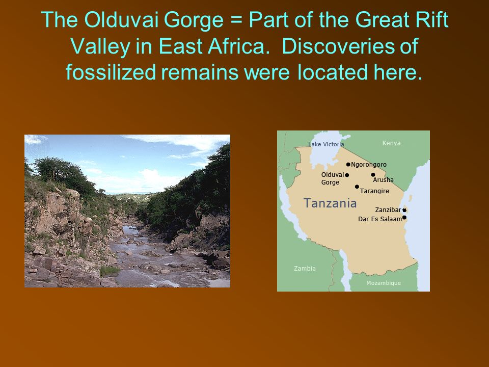 the discoveries at olduvai gorge