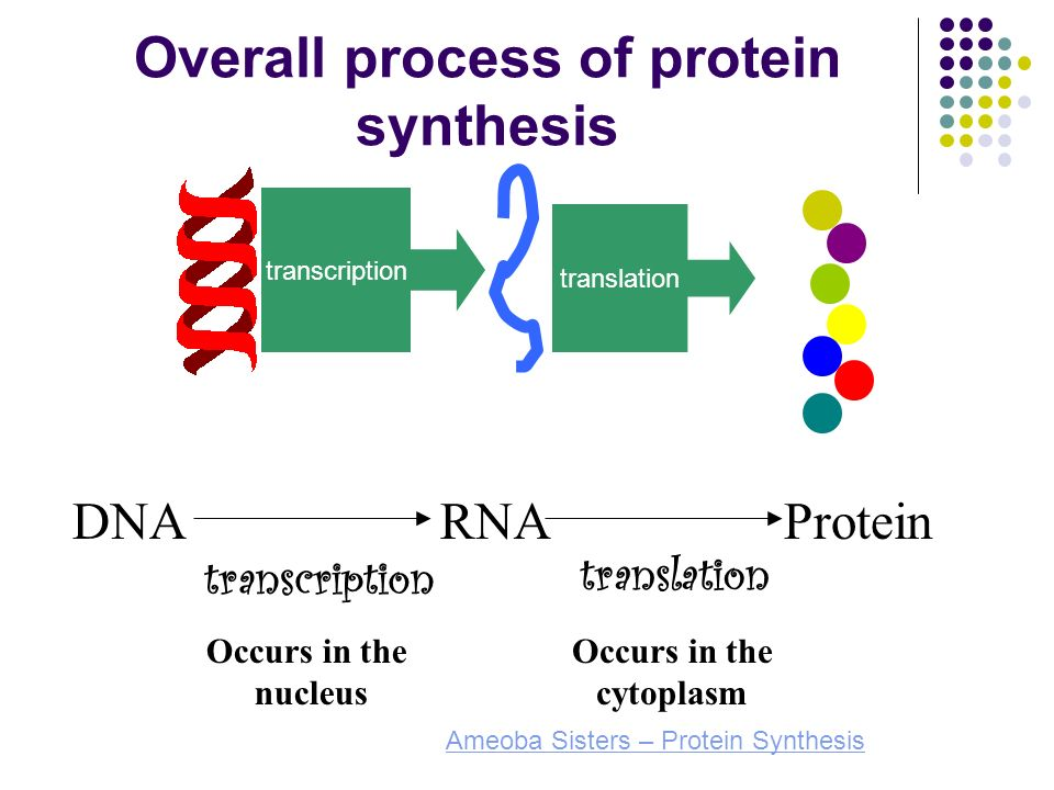 process of protein synthesis 2018-7-17  protein synthesis is the process of converting the dna sequence to a sequence of amino acids to form a specific protein it involves three main steps: transcription of mrna from the dna sequence, initiation of the translation of the mrna sequence to an amino acid sequence and elongation of the.
