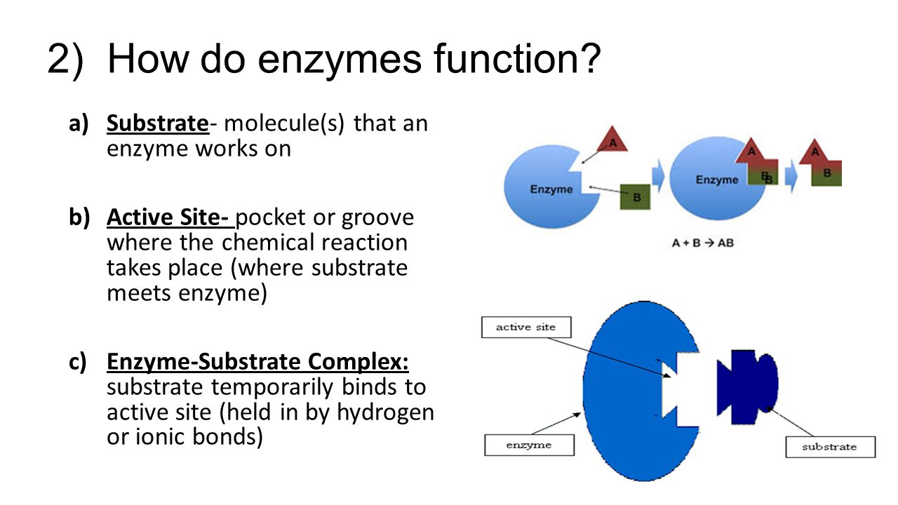 Aim 7E: How do enzymes control chemical reactions? - ppt ...