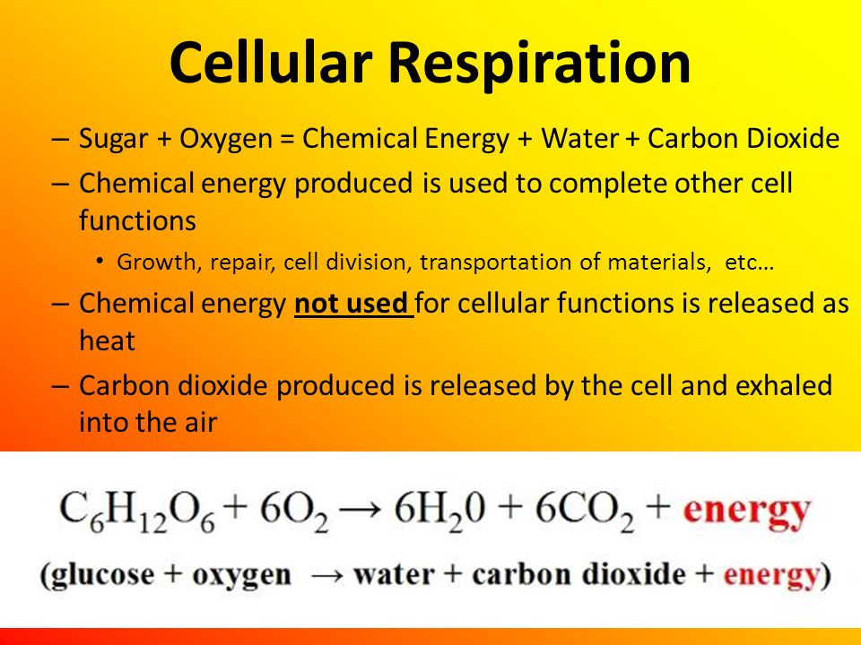 Cellular Respiration Sugar + Oxygen = Chemical Energy + Water + Carbon Dioxide. Chemical energy produced is used to complete other cell functions.