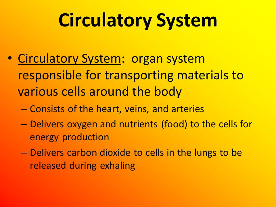 Circulatory System Circulatory System: organ system responsible for transporting materials to various cells around the body.