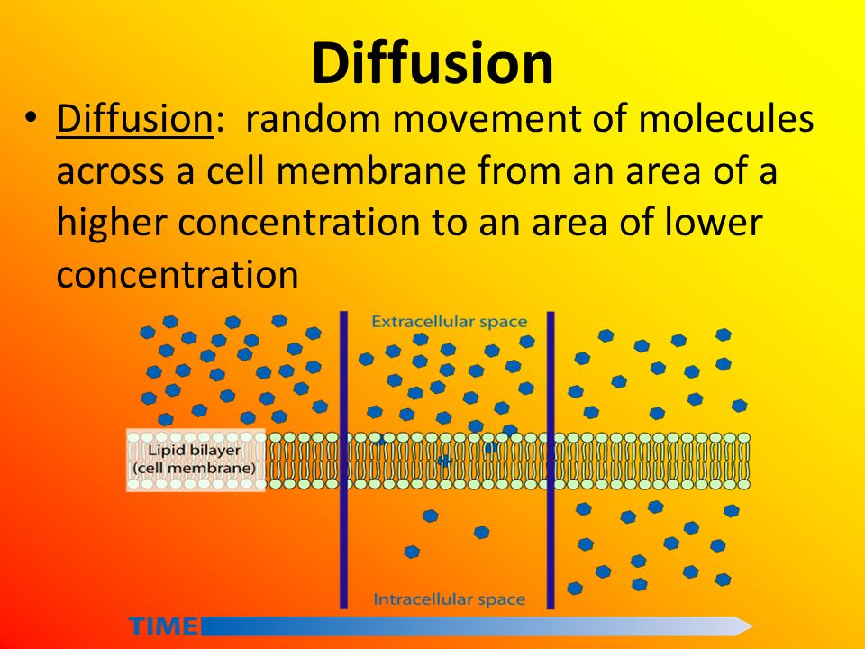 Diffusion Diffusion: random movement of molecules across a cell membrane from an area of a higher concentration to an area of lower concentration.