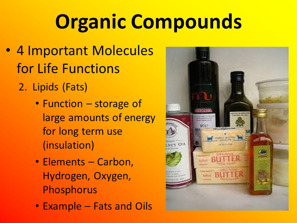 Organic Compounds 4 Important Molecules for Life Functions