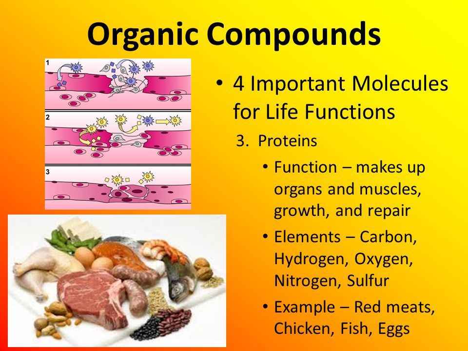 Organic Compounds 4 Important Molecules for Life Functions 3. Proteins