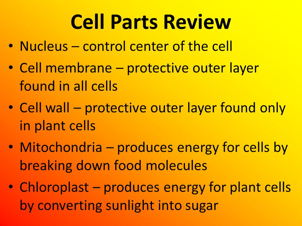 Cell Parts Review Nucleus – control center of the cell