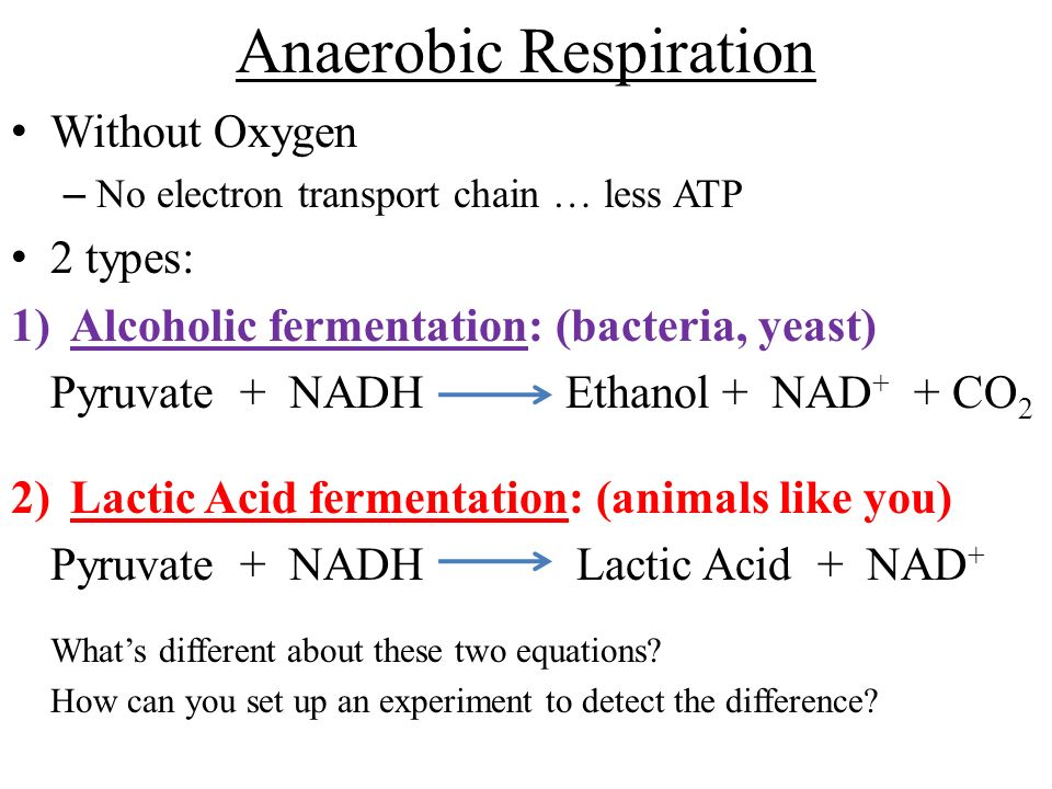 yeast respiration Anaerobic cell respiration by yeast background: yeast are tiny single-celled (unicellular) fungi the organisms in the kingdom fungi are not capable of making their own food.
