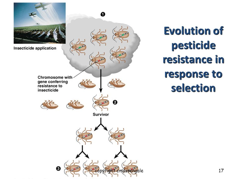 Evolution of pesticide resistance in response to selection