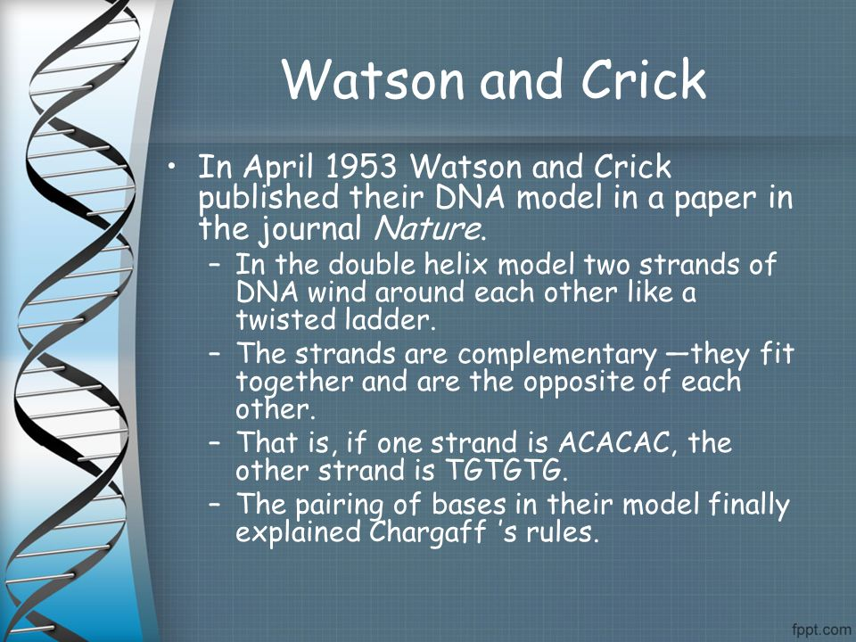 "watson and crick dna research paper The article created a sensation the dna molecule, watson and crick had found,  is shaped like a double helix, or ""gently twisted ladder  james watson became  a senior research fellow in biology at the california institute of technology,."
