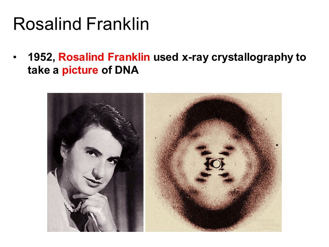 Dna the blueprint of life ppt video online download 3 rosalind franklin 1952 rosalind franklin used x ray crystallography to take a picture of dna malvernweather Choice Image