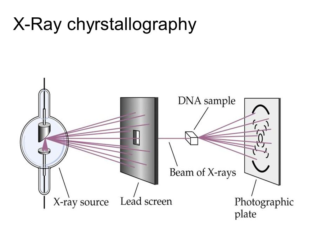 Dna the blueprint of life ppt video online download 6 x ray chyrstallography malvernweather Images